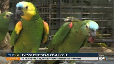 Aves se refrescam com picolé - No Parque das Aves, chuveiros estão instalados nos recintos.