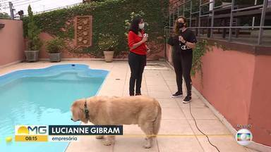 Saiba como manter o bem estar dos animais durante o calor - Cachorro usa a piscina para se refrescar.