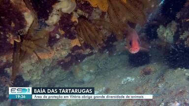 Área de proteção em Vitória abriga grande diversidade de animais marinhos - Assista.