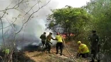 Pantaneiros se unem a brigadistas no combate às chamas no Pantanal em MS - O fogo já atingiu quase 30% do território do bioma.