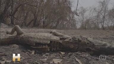 Outubro de 2020 já teve mais queimadas no Pantanal e Amazônia do que outubro de 2019 - Ambientalistas dizem que estamos num ciclo vicioso: quanto mais desmatamento, mais queimadas e mais fumaça. E quanto mais fumaça, menos chuva.