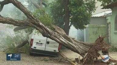 Árvore cai e atinge três veículos nos Campos Elíseos em Ribeirão Preto, SP - Trecho entre a Rua Paraíba e Avenida Saudade está interditado. Equipe do Corpo de Bombeirosestá no local.