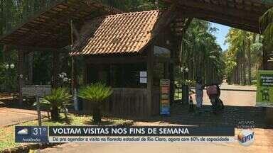 Visitas na Floresta Estadual de Rio Claro voltam aos fins de semana - Local pode receber 60% da capacidade com regras.