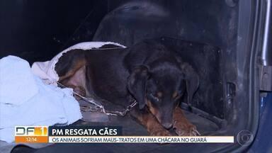 Polícia encontra cães acorrentados no Guará II - Animais estavam em uma chácara na região do Parque Ezechias Heringer. O dono foi preso em flagrante. Agora, com a nova lei que endurece a pena para maus-tratos, o responsável pode pegar de dois a cinco anos de prisão.