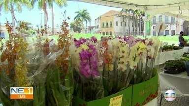 Feira no Recife reúne vários tipos de plantas e flores - Para quem for de carro, é possível comprar sem descer do veículo.