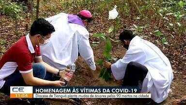 Diocese de Tianguá planta muda de árvores pelos 90 vítimas de covid-19 na cidade - Saiba mais em g1.com.br/ce