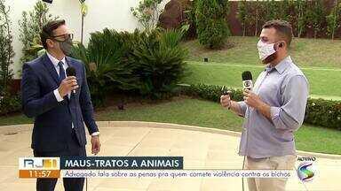 Advogado fala sobre penas para quem comete violência contra animaisanimais - Em Paraty, um homem foi preso na quarta-feira (4) por deixar cachorro em condições precárias.