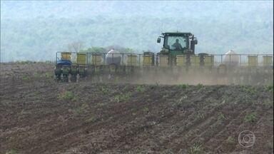 Produtores do Maranhão iniciam plantio da soja - Agricultores correm para conseguir cultivar dentro janela ideal e, assim, aproveitar o calendário de chuvas para a segunda safra de milho.