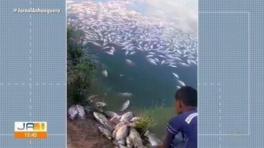 Cinco mil peixes morrem em criadouro por falta de energia elétrica, em São Domingos - Criador reclama do prejuízo após tanto tempo sem energia.