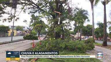 Chuva deixa ruas alagadas e prova queda de árvores em Belo Horizonte - Rua continuou interditada nesta manhã.