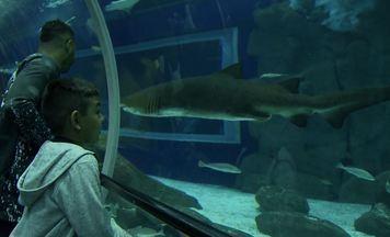Conheça o AquaRio, o maior aquário marinho da América do Sul - Equipe se aventurou nadando com tubarões e conheceu pesquisas desenvolvidas nesse ambiente.