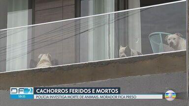 Justiça decide manter preso morador de Arniqueira que esfaqueou pitbulls - Com a decisão, Jonatas Almeida, de 25 anos, segue preso na carceragem do Departamento de Polícia Especializada, sob a acusação de crime de maus tratos.