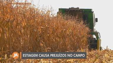 Estiagem causa prejuízos no campo em municípios do Norte e Noroeste do RS - Assista ao vídeo.