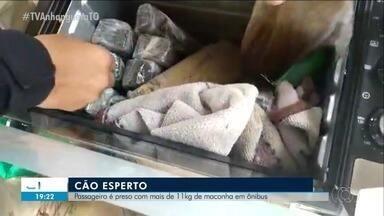 Passageiro é preso após cão farejador encontrar 11 quilos de maconha em ônibus - Passageiro é preso após cão farejador encontrar 11 quilos de maconha em ônibus