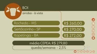 Confira os preços do Boi Gordo - Na sexta-feira, em Rochedo, Mato Grosso do Sul, a arroba à vista foi negociada por R$ 260,00. Em Sertãozinho, SP, R$ 270,00. Em Itapetinga, Bahia, R$ 272,00. A média CEPEA, com os preços do estado de SP, fechou a semana em R$ 279,80, queda de 2,5%.