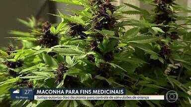 Família consegue autorização definitiva para plantar maconha de uso medicinal - Óleo da planta será usada por criança que tem epilepsia.