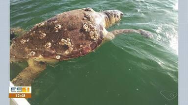 Equipe de canoa havaiana encontra tartaruga agarrada a rede de pesca em Vitória - Assista a seguir.