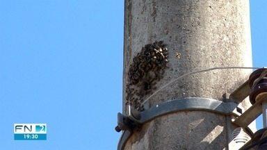 Colmeia de abelhas preocupa moradores de bairro em Presidente Prudente - Situação afeta o Jardim Monte Alto.