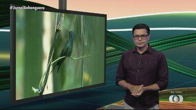 Veja os destaques do Jornal do Campo deste domingo (20) - Programa é apresentado por Márcio Venício.