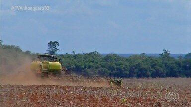 Produção de milho no Cerrado vem mudando nos últimos anos; entenda - Produção de milho no Cerrado vem mudando nos últimos anos; entenda