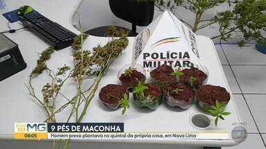 Homem que plantava maconha no quintal da própria casa é preso em Nova Lima - Policiais militares chegaram ao local depois de uma denúncia anônima.