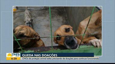 ONGs de proteção animal precisam de doações para continuarem funcionando, em João Pessoa - Queda nas doações tem dificultado manutenção das ONGs