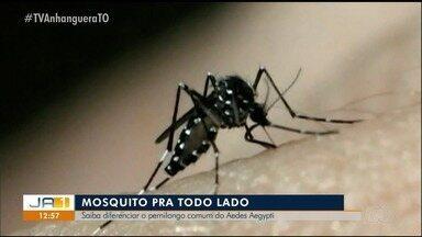 Aprenda a diferenciar o pernilongo do Aedes Aegypti, mosquito que causa várias doenças - Aprenda a diferenciar o pernilongo do Aedes Aegypti, mosquito que causa várias doenças