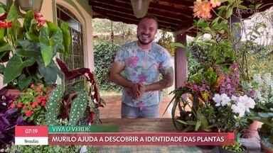 'É de Casa' desvenda nome de plantas diferentes - No 'Viva o Verde Verão', Murilo Soares ensina cultivar duas plantas com nomes bem curiosos: cebola grávida, mini-unha-de-gato, ora-pro-nobis arbórea e o ligustrinho