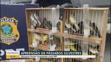 Vitória da Conquista: Polícia Rodoviária Federal apreende mais de 100 pássaros silvestres - Aves estavam sendo levadas irregularmente de São Paulo para Maceió e foram encontradas na BR-116.