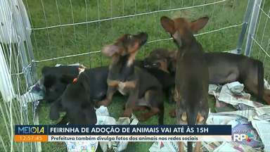 Prefeitura de Maringá divulga fotos de animais para adoção - Feiras de adoção são realizadas todos os meses em vários pontos da cidade.