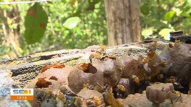 Saiba o que fazer ao se deparar com um enxame de abelhas - Saiba o que fazer ao se deparar com um enxame de abelhas.
