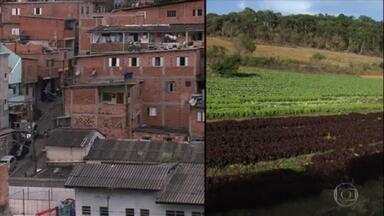 Reveja os projetos sociais que levam produtos de agricultores a famílias de baixa renda do país - Na série de melhores reportagens do Globo Rural, relembre o Campo Favela, iniciativa do Insper em SP que beneficiou 250 famílias de pequenos produtores e 23 mil lares de baixa renda das periferias.