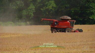 Produtores têm boas expectativas para a colheita de soja - Produção não para.
