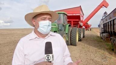 Colheita de soja atinge pouco mais de 22% da área cultivada - Colheita de soja atinge pouco mais de 22% da área cultivada