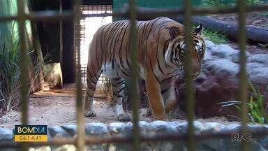 Zoológico de Cascavel fecha novamente, dois dias após ser reaberto - O motivo do fechamento é a grava situação da pandemia na cidade.