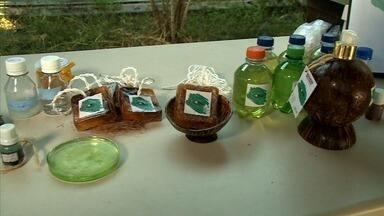 Estudantes desenvolvem produtos de limpeza feitos de coco - Irmãos gêmeos estão representando Alagoas na Feira Brasileira de Ciências e Engenharia.