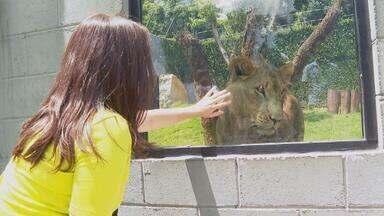 Antena Paulista - Edição de 21/03/2021 - Com zoológico de Guarulhos fechado, animais também enfrentam quarentena. Duas crianças se unem para preservar um pedaço da Mata Atlântica em Itu.