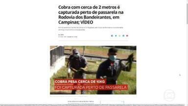 Cobra com 2 metros é capturada em passarela da Rodovia dos Bandeirantes, em Campinas - Animal pesa 10 quilos e é uma jibóia.
