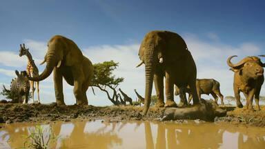 Globo Repórter mostra belezas e desafios de grande migração de animais nesta sexta (9) - O programa nos leva para reencontrar personagens que já foram mostrados anteriormente, do Parque Serengeti, na África.
