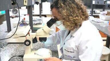 UFMG descobre nova variante do coronavírus em Belo Horizonte - Anuncio veio no mesmo dia em que o estado bateu novo recorde de mortes em 24h