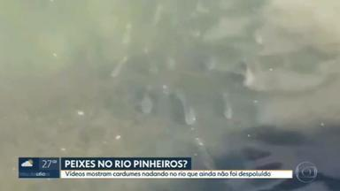 Apesar da poluição, videos mostram peixes nadando pelo Rio Pinheiros - Um internauta filmou o cardume e afirma que não é a primeira vez que peixem nadam no local. Ambientalistas afirmam que as obras de despoluição ainda estão longe de terminar e falta muito ainda para que o rio Pinheiro volte a ter vida.