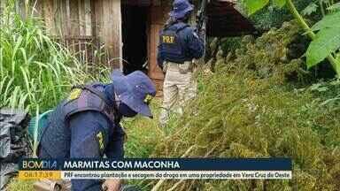 PRF descobre galpão de plantação de maconha em Vera Cruz do Oeste - Policiais chegaram ao galpão após suspeito fugir de uma tentativa de abordagem. Além de 78 pés de maconha, droga pronta para o consumo também foi encontrada, segundo a PRF.