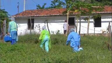 Profissionais de saúde enfrentam dificuldades para vacinar na zona rural do Ceará - Agentes de saúde já tiveram que arrumar estrada e atravessar rio de canoa para chegar aos pacientes. Estado conta com mais de meio milhão de idosos na zona rural.