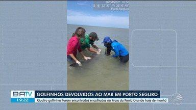 Quatro golfinhos encontrados encalhados na orla de Porto Seguro são devolvidos à natureza - Resgate dos animais foi nesta segunda-feira (26).