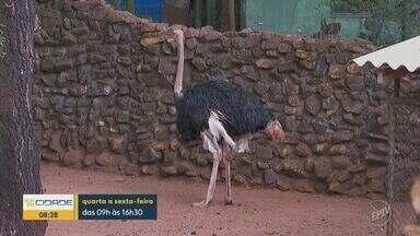 Bosque Fábio Barreto reabre para visitação a partir desta quarta em Ribeirão Preto - Horário de funcionamento será de quarta à sexta, das 9h às 16h. Aos finais de semana e feriados o zoológico permanece fechado.