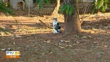 Moradores denunciam a morte de gatos por envenenamento - Até um boletim de ocorrência foi registrado.