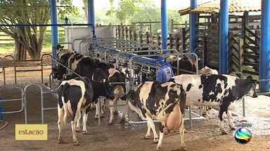 Edital para compra de leite vai ajudar produção leiteira de Sergipe - Edital para compra de leite vai ajudar produção leiteira de Sergipe.