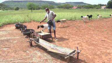 Em Picos, criadores recebem assistência técnica para aumento da produtividade - Em Picos, criadores recebem assistência técnica para aumento da produtividade