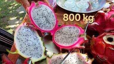 Casal aposta na produção de pitaya e conquista certificação orgânica da propriedade no ES - Veja a seguir.
