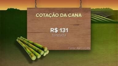 Confira a cotação da cana neste domingo (09) - Inter TV Rural traz informações sobre a cotação da cana.